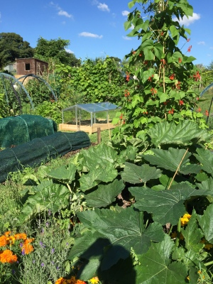 As ever, courgettes spreading everywhere